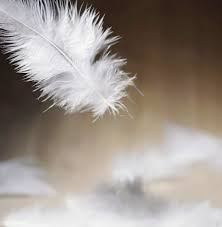 pillow feather