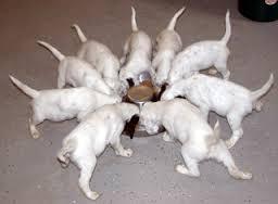 puppy tails