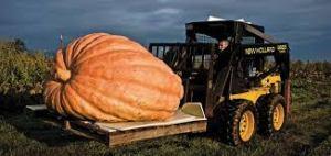 gigantic pumplin