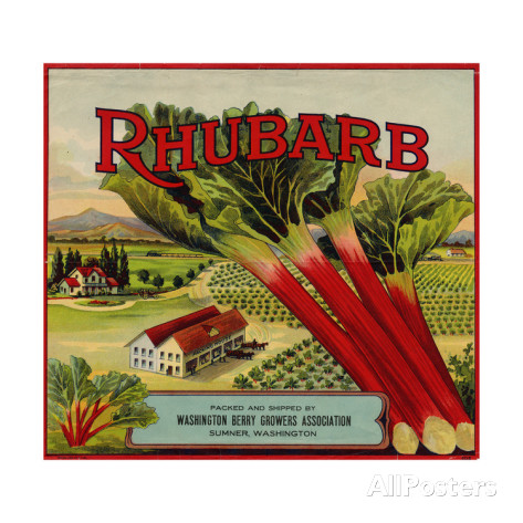fruit-crate-labels-rhubarb-packed-and-shipped-by-washington-berry-growers-association