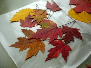 wax-paper-leaves