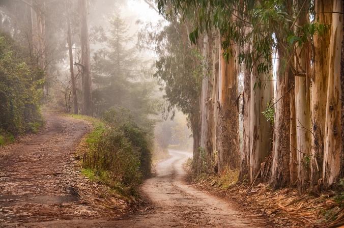 road-less-travelled-lg